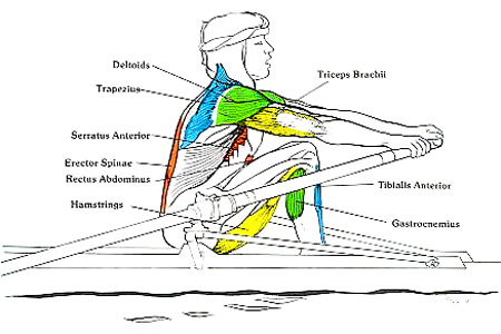 benefits rowing muscle groups