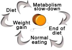 crash-diet-cycle